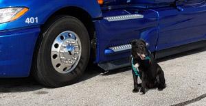pet rider policy hazmat driver jobs