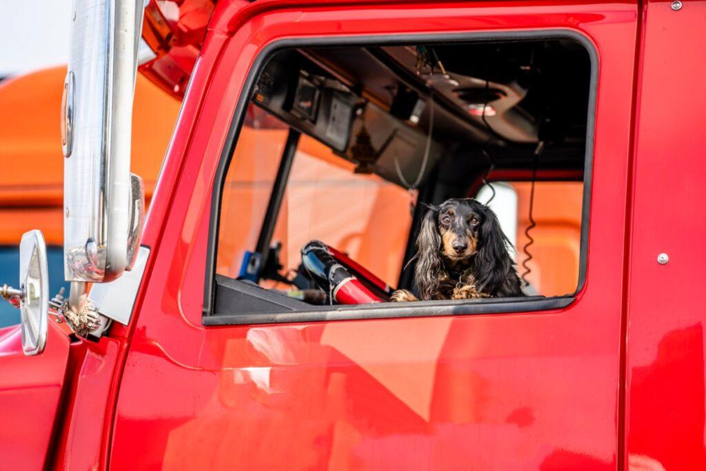 hazmat driver jobs